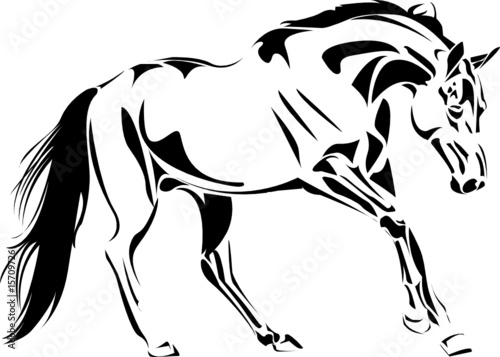 sketch vector stallion