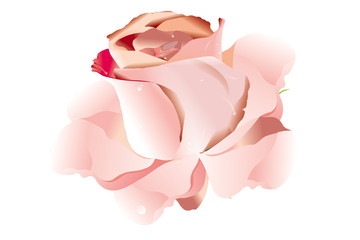 the vector image of a beautiful rose