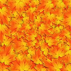 Autunno foglie-Autumn Leaves-Feuilles D'Automne-1