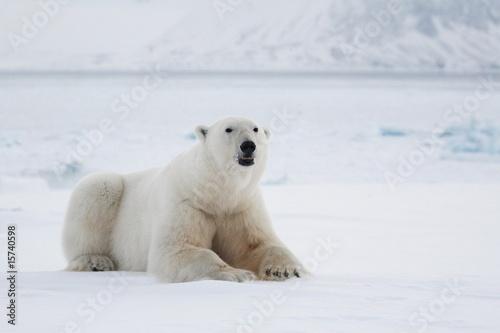 Fototapeten Eisbar Polar bear