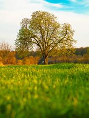 Wiese, Baum, Himmel