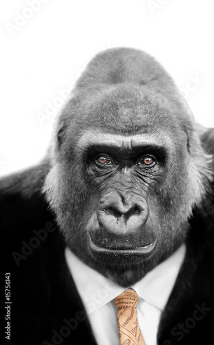 Monkey Business, Silverback Ape wearing Stock Market Tie