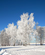 Winter landscape with frosted trees