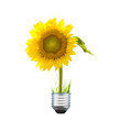 Alternative energy bulb with sunflower and grass