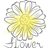 sketch of flower with watercolor blot