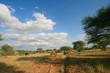 Afrikanische Elephantenherde