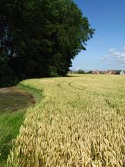 Campagne à Knokke-Heist