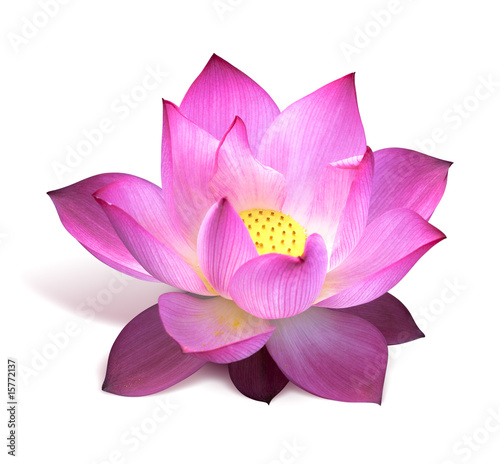 In de dag Lotusbloem fleur de lotus