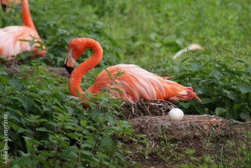 Foto Spatwand Flamingo Caribeban Flamingo Nest