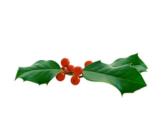 Sprig of holly leaves with red berries
