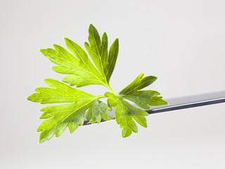 Fresh parsley leaf