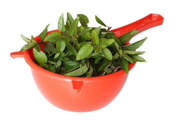 Fresh mint in strainer