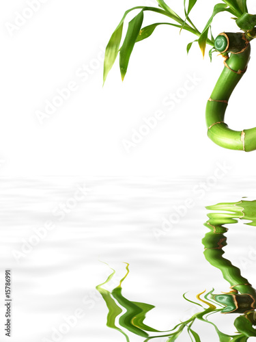 Isolated bamboo reflected in water