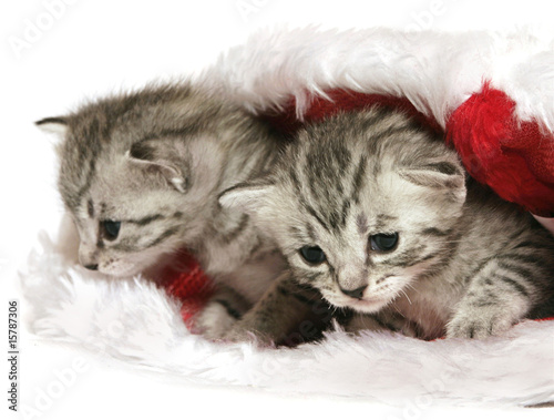 Kittens in Christmas hat