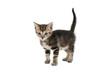 Kittens standing