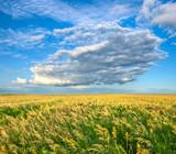 endless field under beautiful skies poster