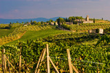 Vineyard in the hills of Toscane poster