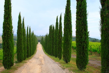 Zypressen mit Weg, Val d'Orcia, Himmel,Toskana,Italien