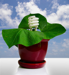 compact fluorescent bulb and a plant (green power)