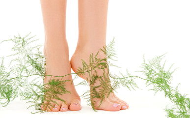 female feet with green plant