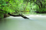 tree trunk in a milky river stream poster