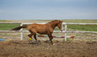 Horse Running / sports training