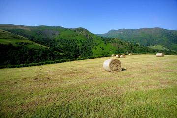champ d'agriculture avec bottes de foin
