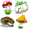Fungo-Mushroom-Champignon