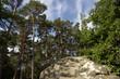 Fontainebleau  pins,  grès et marque jaune