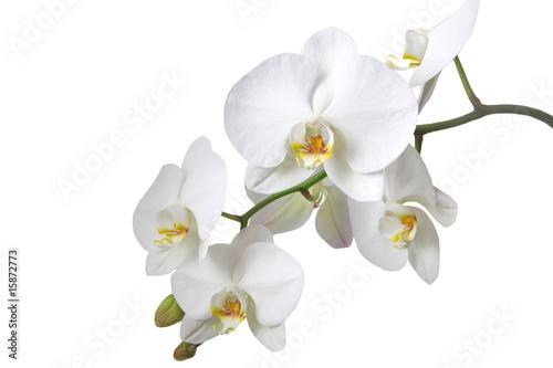 Kchenrckwand aus glas mit foto orchideen altavistaventures Images