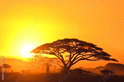 Fototapeten,sunrise,sonnenuntergänge,orange,baum