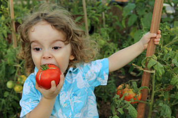 Enfant mangeant une tomate du jardin