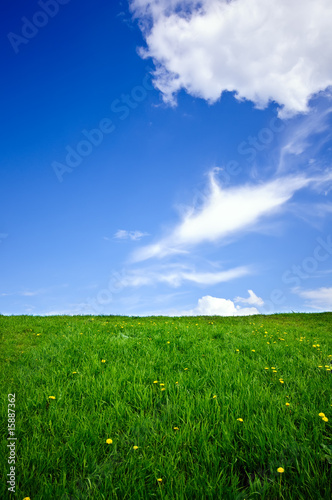 grass meadow, blue sky and white clouds