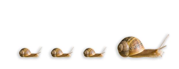 escargot et 3 petits