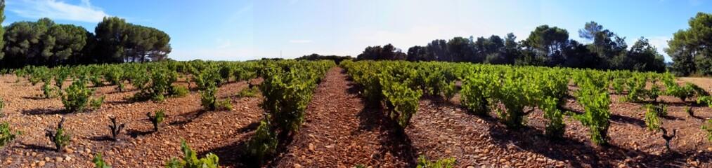 Panorama de vignes