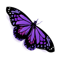 beautiful butterfly,vector