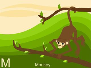 Animal alphabet flash card, M for monkey