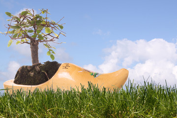 Wooden shoe, clog with Bonsai tree in grass