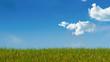 environnement - herbe verte sur fond de ciel bleu