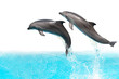 Jumping Dolphins - 15960976