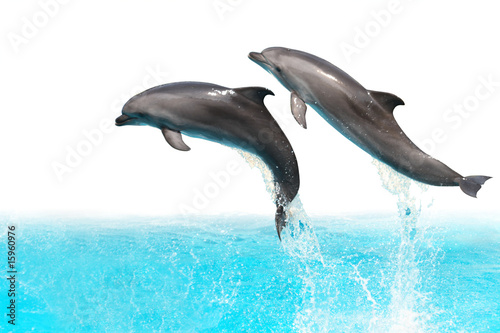 Fotobehang Dolfijnen Jumping Dolphins