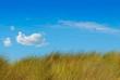 herbes hautes et ciel bleu, fond pour l'environnement