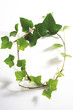 Ivy leaves, Hedera helix