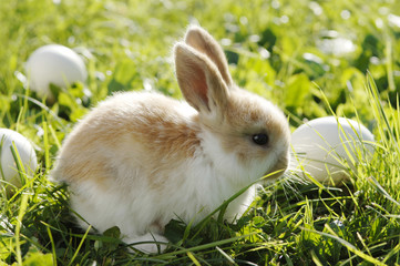Kaninchen in der Wiese sitzend