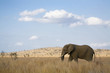 South Africa, Krüger National Park, Elefant
