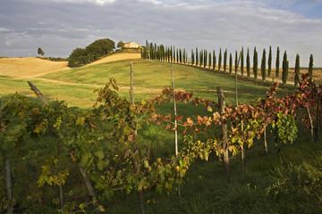 Italien, Toskana, Weingut