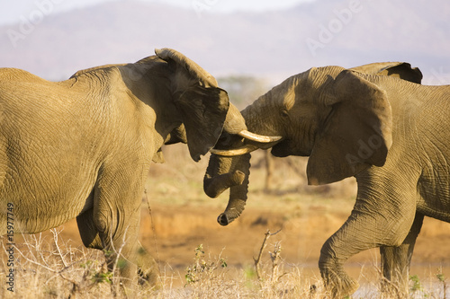 South Africa, Krüger National Park, Elefants struggling