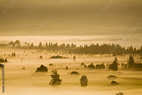 Germany, Bavaria, Murnauer Moos, morning fog