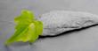 bandeau horizontal, environnement naturel vert