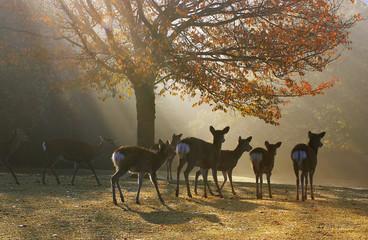 朝もやと鹿